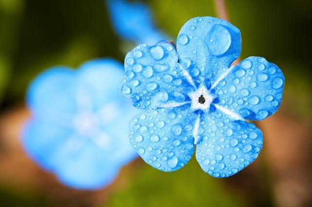 Chopin - Raindrop Prelude